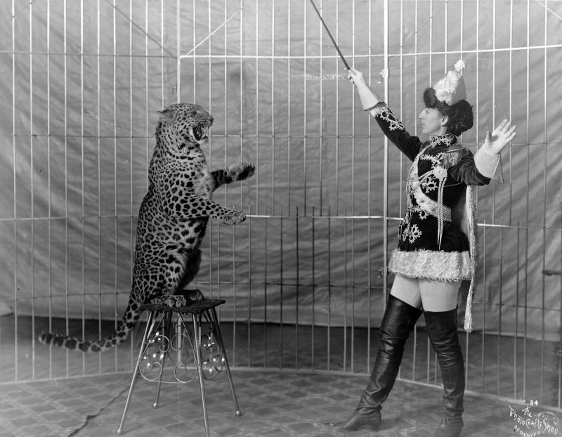 victorian circus with tigers